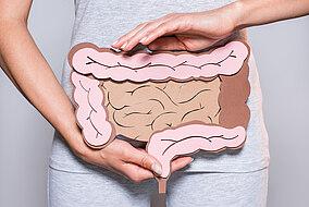 Illustrative Veranschaulichung des menschlichen Darms