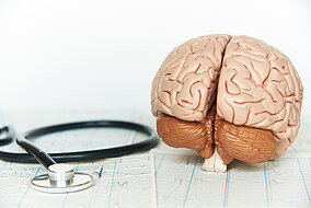 Stethoskop und ein Modell des Gehirns liegen auf einem flachen Untergrund
