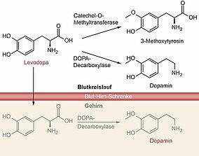 Chemische Formel für Dopamin