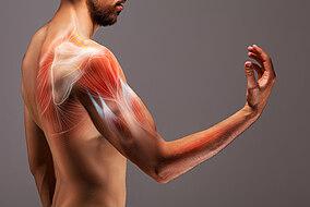Illustrative Darstellung der Oberarm Muskeln