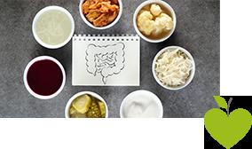 Lebensmittel, die Probiotika beinhalten und eine Skizze des Darms
