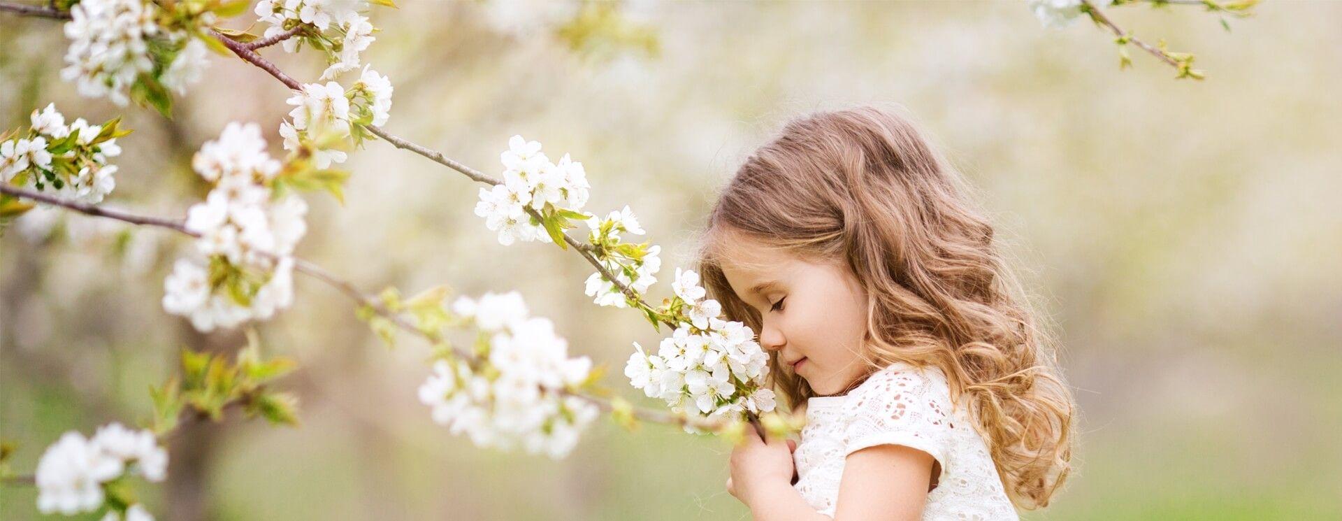 Kleines Mädchen riecht im Frühling an Kirschblüten